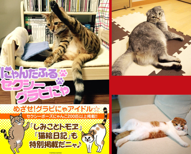 Free Japanese e-book of cats in sexy poses is like the entire Internet in one convenient package