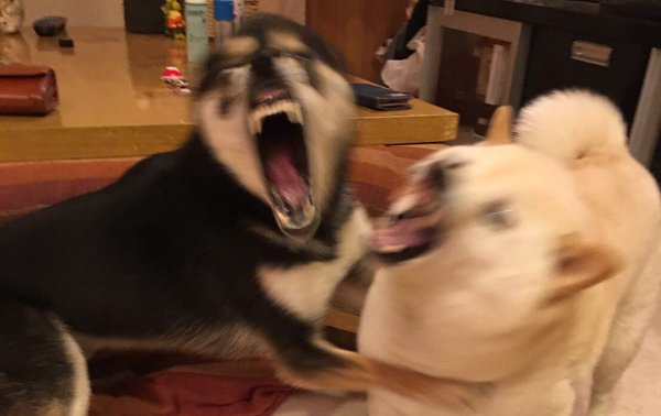 Japanese dogs fail to stay calm during earthquake, succeed in bringing smiles to humans' faces