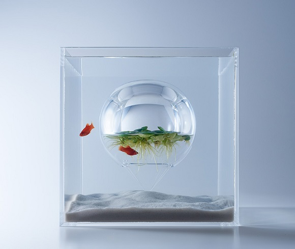 Elegant aquariums provide a unique space for fish and for above ground plants to grow together
