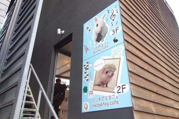 Hedgehog Cafe6