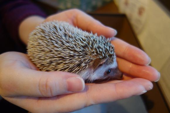 Hedgehog Cafe68