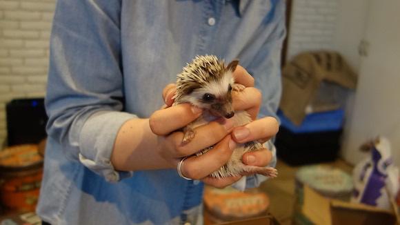 Hedgehog Cafe90