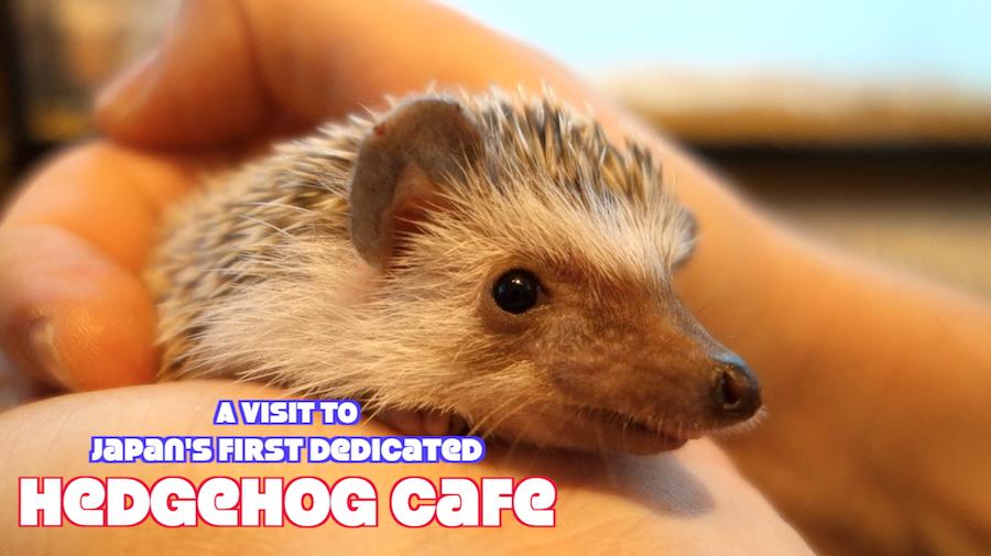 Hedgehog Top