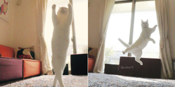 Japanese ballerino cat dances his way into the hearts of millions across the globe【Pics】