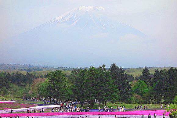 Shibazakura0162