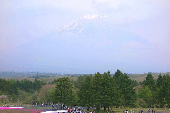 Shibazakura0163