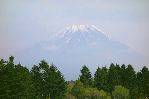 Shibazakura083