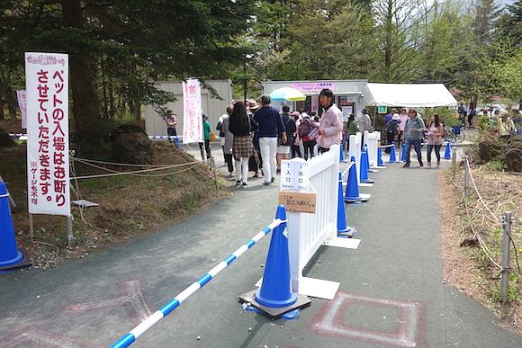 Shibazakura2