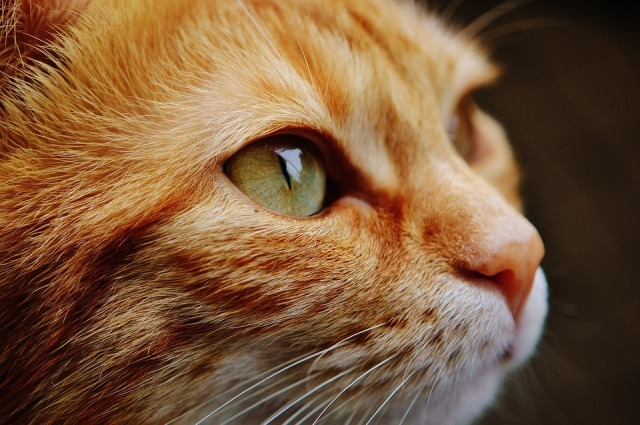 Japanese cat cafe shut down permanently by Tokyo government for animal welfare violations
