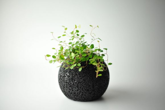"""Eco-pochi"" indoor plants will add style to your home and remove stinky smells, too!"