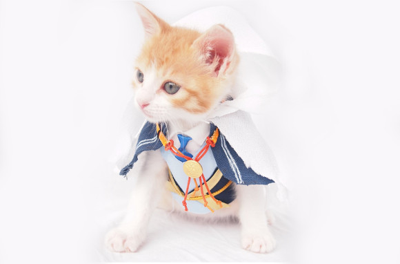 【Monday Kickstart】Adorable kitten cosplays as Japanese swordsman from popular game Touken Ranbu