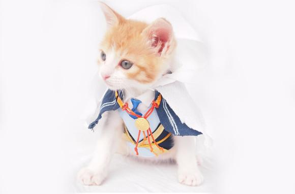 【Monday Kickstart】Adorable kitten cosplays as Japanese swordsman from popular game Touken Ranbu