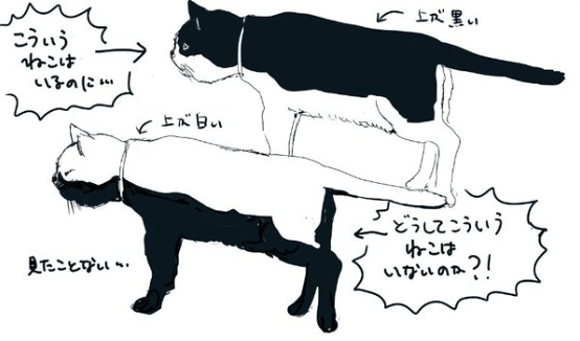 Why don't black-and-white cats have light-coloured backs and black bellies?
