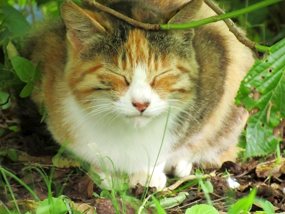 """How to visit the cats of Jogashima Island Park on a """"Tuna Ticket"""" from Tokyo"""
