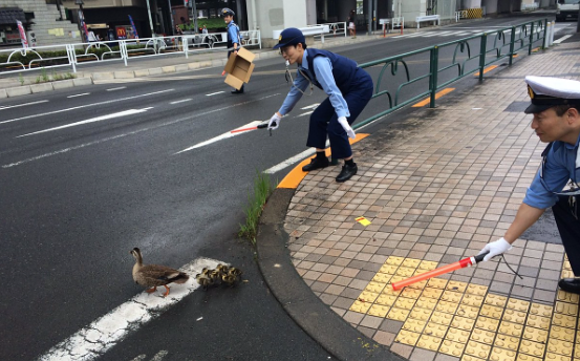 Japanese police melt hearts with show of extreme courtesy to wildlife