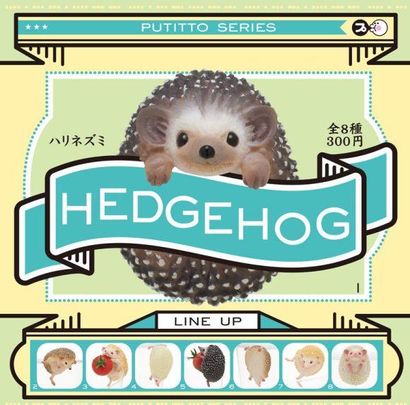 hedgehog_dp_re