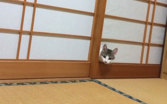 Cute cat surprises owner with ability to walk through walls