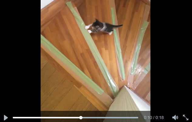 Videos of Japanese kitten learning to climb stairs are amazingly heartwarming and inspiring
