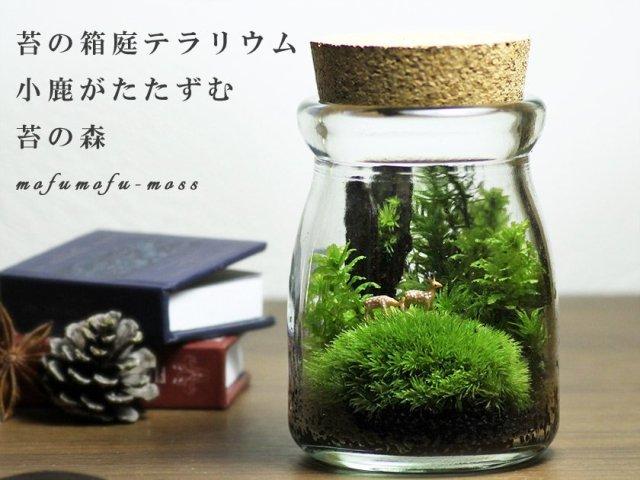 Add a little green to your life: Green moss terrariums are the new Zen gardens