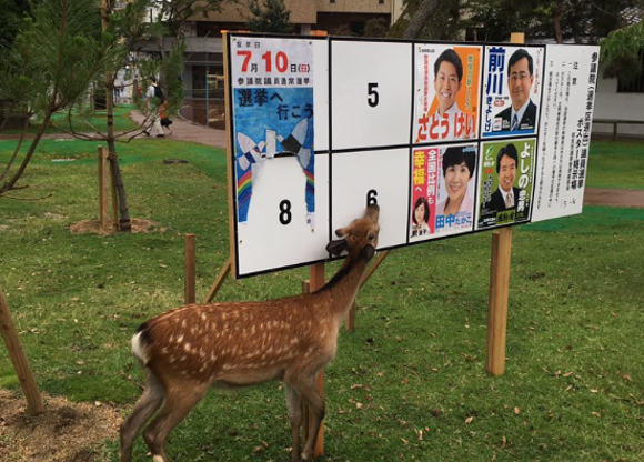 Nara deer takes a stand against upcoming Japanese election by eating electoral poster