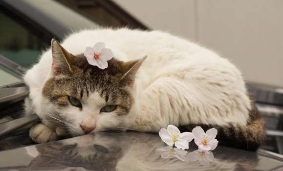 Japanese photographer captures the lives of cats in Tokyo with beautiful results