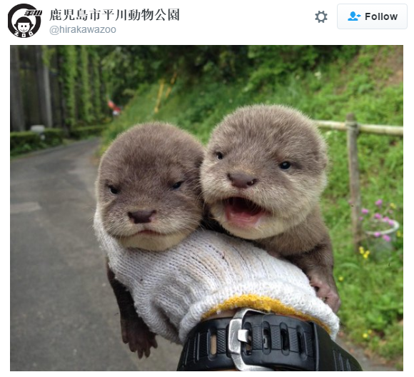 Otterly adorable otters are here to make your day【Photos】