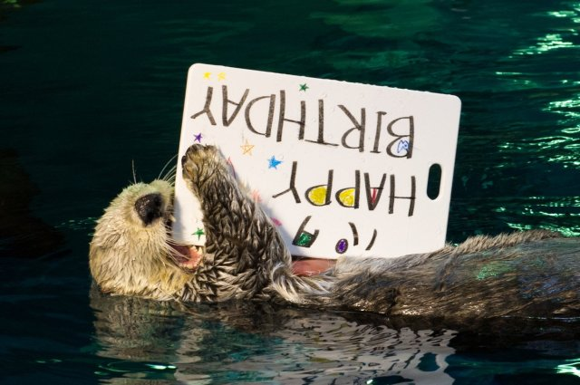 Pata the Otter celebrates her 20th birthday with a photo exhibit!