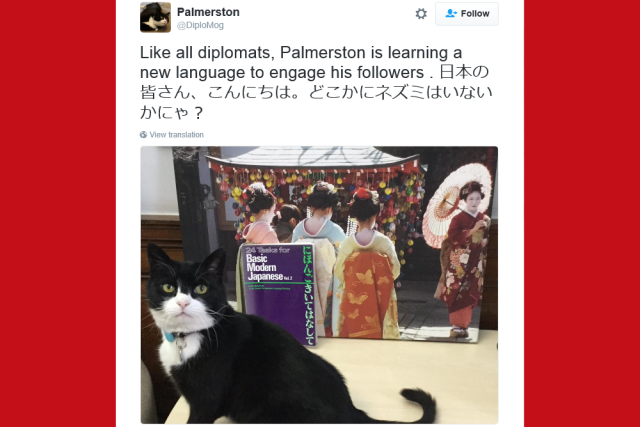 U.K. Foreign & Commonwealth Office's cat charms and surprises Japan by Tweeting in Japanese