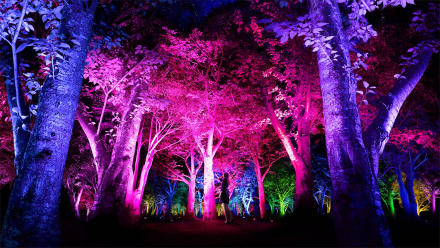 Kyoto's primeval forest to come to life in beautiful interactive light art display 【Video】