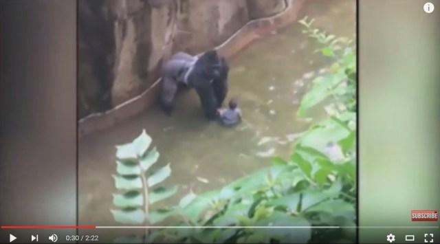 Japanese Netizens weigh in on Cincinnati Zoo's killing of Harambe the gorilla