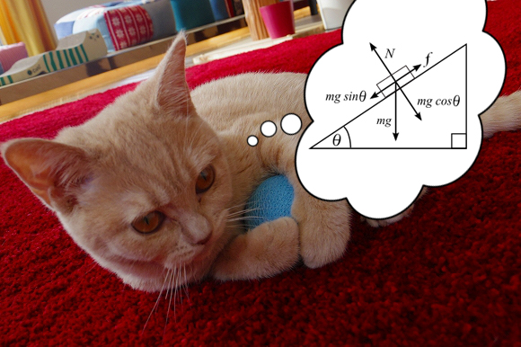 Kyoto University study finds that cats have interest in phsyics
