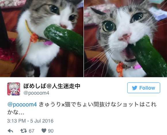 Japanese cat wows the internet with an insatiable hunger for vegetables