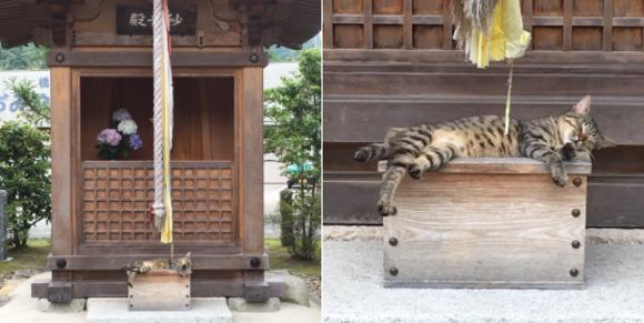 Cat Shrine Top