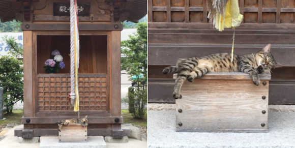 Cute cat finds way to make humans bow down and worship him at Japanese shrine