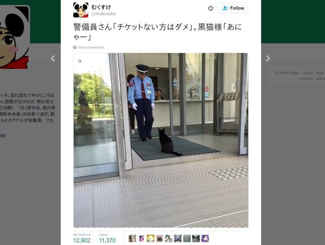 Art-loving feline attempts to enter cat exhibition at Hiroshima museum