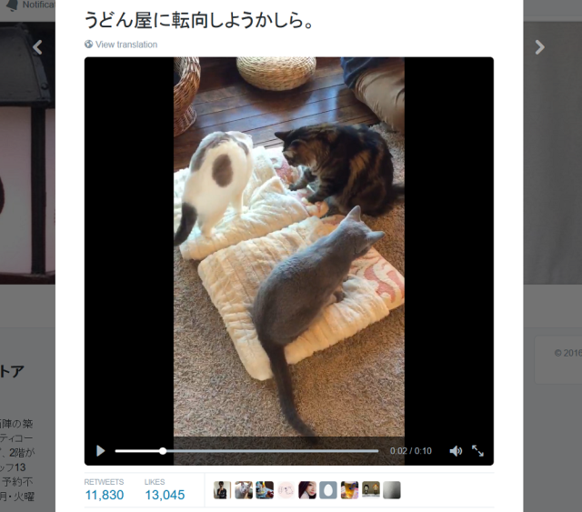 "These cats ""knead"" you to show them some love【Video】"