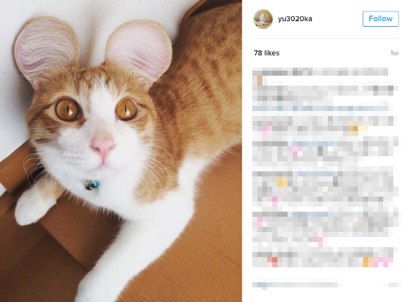 Pets get mouse ear makeovers thanks to trending app in Japan