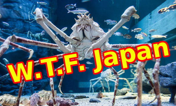 W.T.F. Japan: Top 5 creepiest Japanese animals 【Weird Top Five】