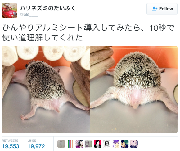 Cute hedgehog cools down like nobody's watching 【Video】