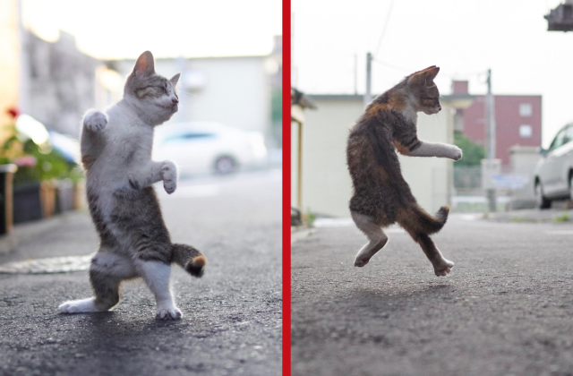 These awesome Japanese alley cats think they're street fighters too 【Photos】