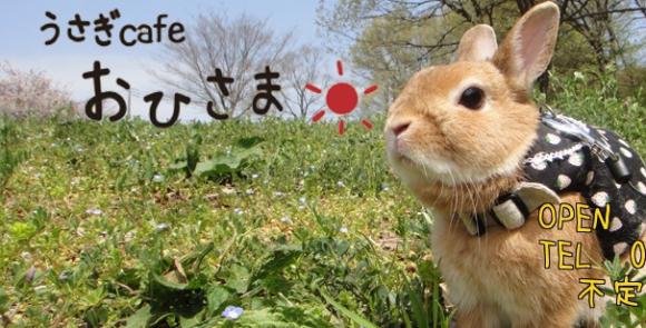 rabbitcafe 01