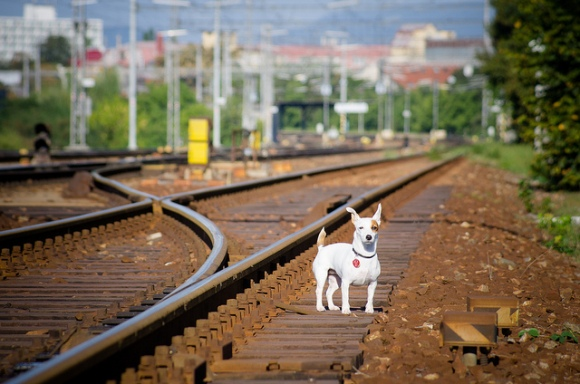 rail dog by Kurt Bauschardt
