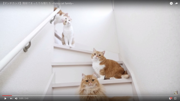 Video of cute cats playing on stairs is filled with relaxation and adorable gazes