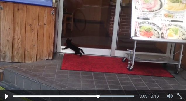 Has anyone ever wanted a bowl of udon as much as this cat in Japan? 【Video】