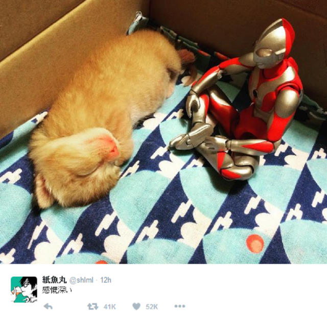 Ultraman pictures prove he protects everyone, humans and furry kitties alike【Photos】