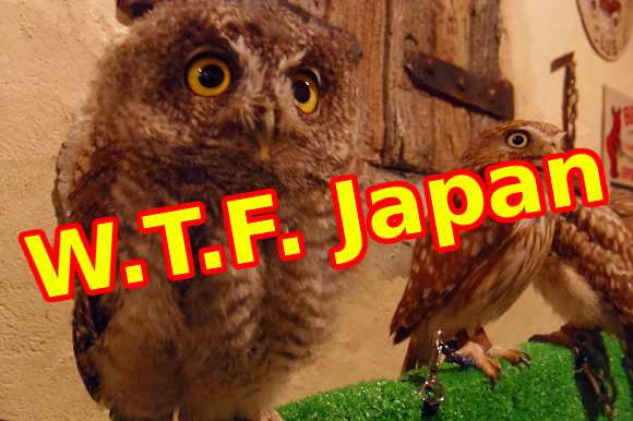 W.T.F. Japan: Top 5 offbeat Japanese animal cafes【Weird Top Five】