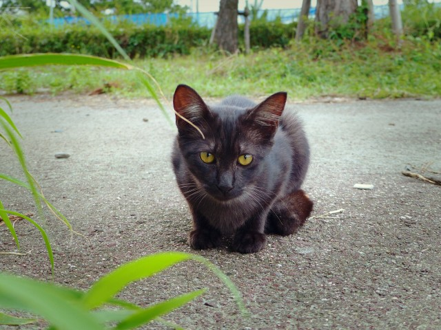 Japanese net is awed, humbled by pianist's story of how uncle was saved by stray cat