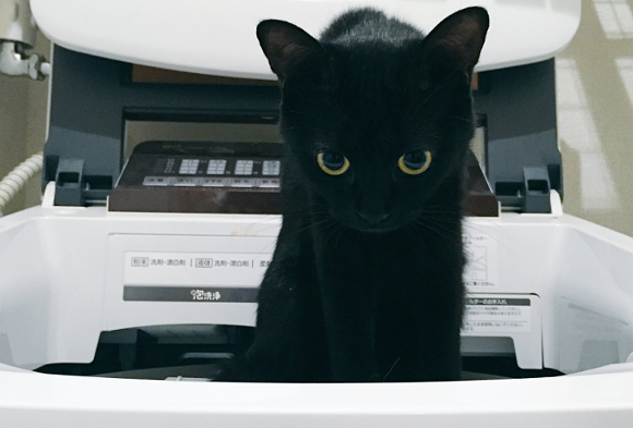 Black cat wields spellbinding magic over Internet as it rises out of washing machine in Japan