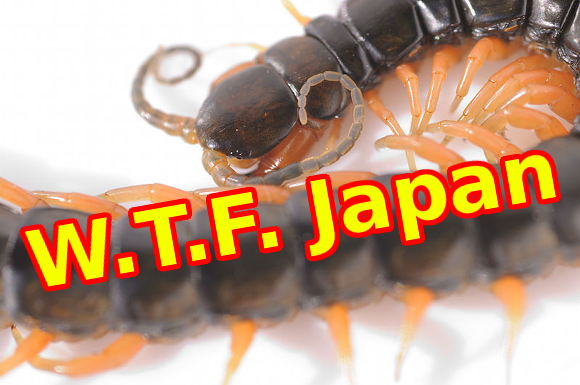 W.T.F. Japan: Top 5 creepiest Japanese insects 【Weird Top Five】