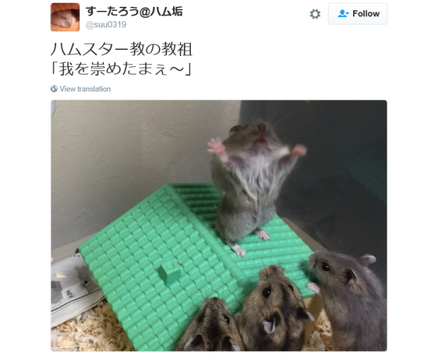 Hamster-lujah! Japanese pet seems to be attracting furry followers to a new religion